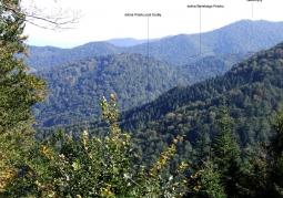 Rezerwat przyrody Baniska