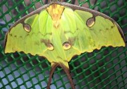 Muzeum Żywych Motyli - Stare Miasto