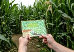 Labirynt w Polu Kukurydzy