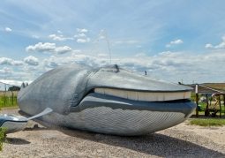 Park Wieloryba - Rewal