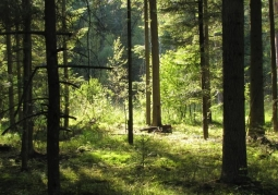 Park Krajobrazowy Lasy Janowskie