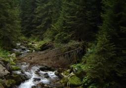 Kościeliski potok