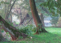 Zdjęcie: Drzewa