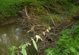 Rezerwat przyrody Bobry w Uhercach - Uherce Mineralne