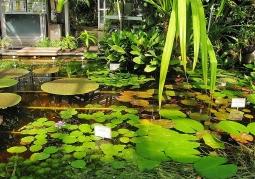 Rośliny szklarniowe