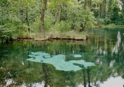 Rezerwat przyrody Niebieskie Źródła - Tomaszów Mazowiecki