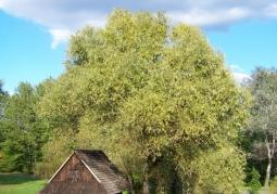 Drewniany chlew na terenie skansenu